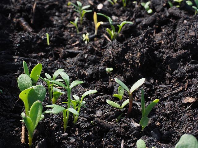 Zabráňte vyťahovaniu zeleninových priesad